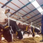 Cattle Expert system   Dairy farm management system