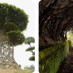 5 Amazing And Unique Trees In The World You Have Never Heard About