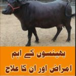 Animals Diseases And Treatment In Urdu PDF Book Download