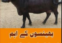 Animals Diseases And Treatment